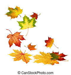 Multi-colored autumn leaves gently falling down, with white copy space