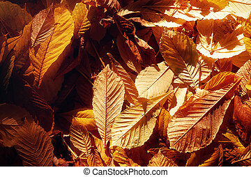 Beautiful autumn leaves, leaf background.