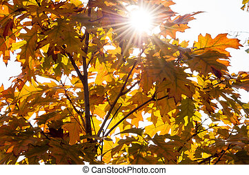 Beautiful Autumn Leaves with Sunlight Shining
