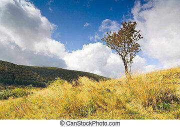beautiful autumn mountain