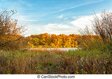 Beautiful autumn orange-yellow forest on the shore of lake in Sunny weather