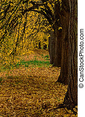 Beautiful autumn park alley. with yellow leaves on the trees