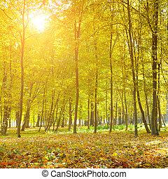 beautiful autumn park and sunrise