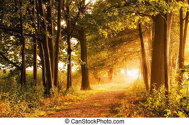 Beautiful autumn scene invites to a walk