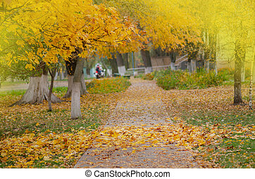 Beautiful autumn scenery in park.  Orange and yellow autumn leaves on trees.