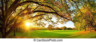 Beautiful autumn scenery on a meadow