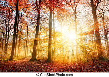Beautiful autumn sunlight in a forest