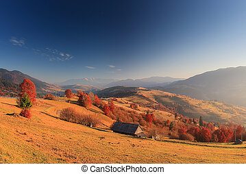 Red trees in mountains in morning sunlight