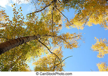 Beautiful autumn time, yellow and red leaves on trees.