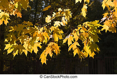 Beautiful autumn tree leaves