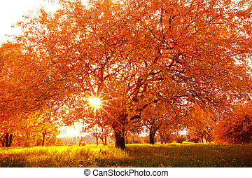 Beautiful autumn tree with fallen dry leaves - Autumn...