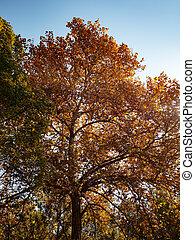Beautiful autumn tree with orange leaves on sky background