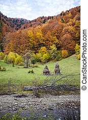 Beautiful autumn trees in the Carpathian Mountains and haystacks on the meadow