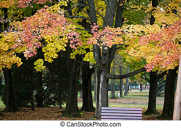 beautiful autumn trees in the park