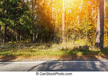 Beautiful autumn trees, on a sunny day