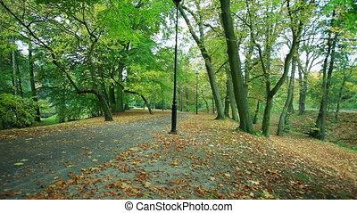 Beautiful autumn trees
