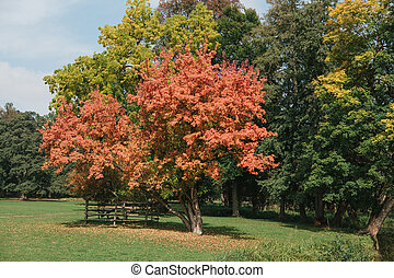 beautiful autumn trees with red, yellow and green leaves in the park on a sunny day