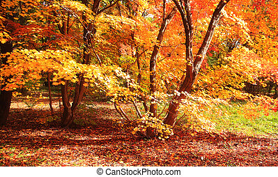 Beautiful autumn trees with yellow leaves