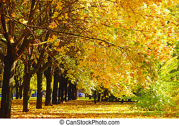 Beautiful autumn trees with yellow leaves in park