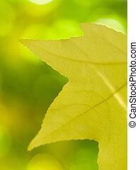 Beautiful autumn yellow leaf