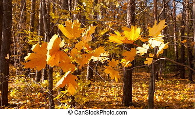 beautiful autumn yellow leaves