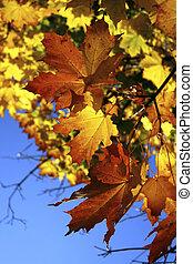 Beautiful autumnal arboreal.