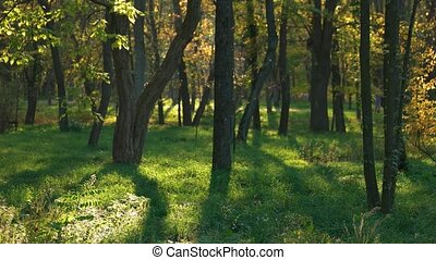 Beautiful autumnal park. Trees, green grass and sunlight. Early fall in forest.