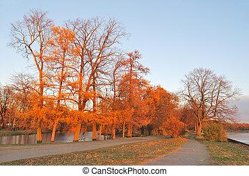 Beautiful autumnal trees at sunset
