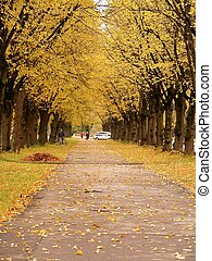 Beautiful avenue in autumn