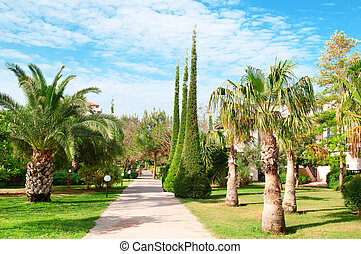 beautiful avenue with palm trees and cypresses