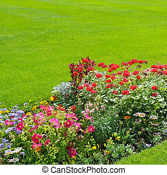 beautiful background of bright garden flowers