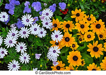 Beautiful background of daisies and gerberas. View from above.