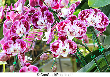 Beautiful background orchids flower in the garden
