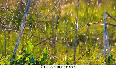 Beautiful background: water Drops falling on fresh green grass