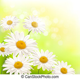 Beautiful background with grass and daisies  Vector