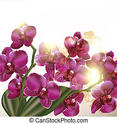 Beautiful background with orchid