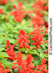 Beautiful background with summer red flowers