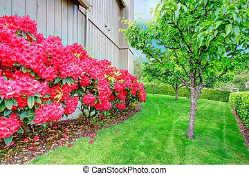 Beautiful backyard garden. Blooming azales