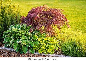 Backyard Garden Plants