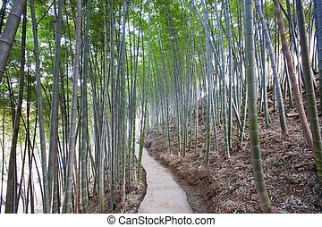 beautiful bamboo forest