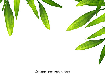 Beautiful bamboo leaves border on white