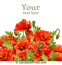 Beautiful banner with red poppies