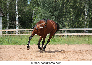 Beautiful bay horse galloping at the field