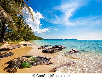 beautiful beach and tropical sea