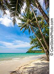 beautiful beach and tropical sea. Palm and tropical beach