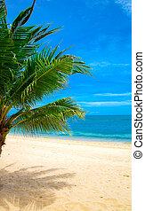 beach - beautiful beach and tropical sea