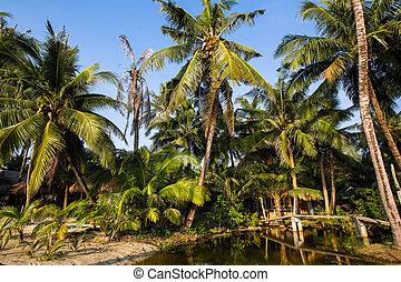 Beautiful beach in tropics.