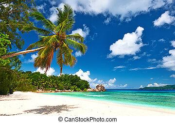 Beautiful beach with palm tree at Seychelles, La Digue.
