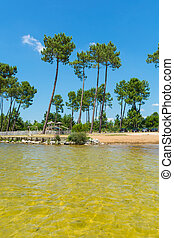 Beautiful Beach With Pine Trees and Yellow Sand Bottom
