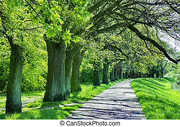 Beautiful beech canopy country road